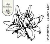 black ink line style sketch... | Shutterstock .eps vector #1168041304