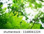 closeup nature view of green... | Shutterstock . vector #1168061224