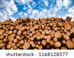 Stacked Wood Logs Against Blue...