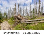 view of an hiking trail in the... | Shutterstock . vector #1168183837