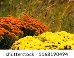rural scene with autumn flowers ... | Shutterstock . vector #1168190494