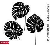 set of tropical leaves....   Shutterstock .eps vector #1168286497