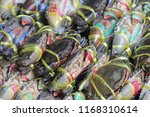 fresh horse crab | Shutterstock . vector #1168310614