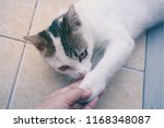 young cat playing with human's... | Shutterstock . vector #1168348087