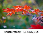 Autumnal leaves background with low focus for seasonal design - stock photo