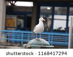 Seagull Bird Perched On Railing ...