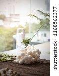 fresh or raw white beech... | Shutterstock . vector #1168562377