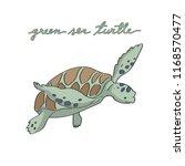 Cute Baby Green Sea Turtle...