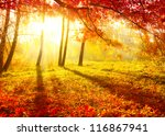 autumn. fall. autumnal park....   Shutterstock . vector #116867941
