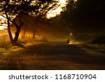 rayong thailand   august 11... | Shutterstock . vector #1168710904