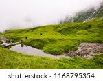 ram and sheep reflecting in... | Shutterstock . vector #1168795354