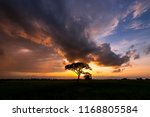 silhouette tree with sunset... | Shutterstock . vector #1168805584