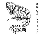 sketch of iguana. hand drawn... | Shutterstock .eps vector #1168814254