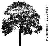 A Tree Silhouette