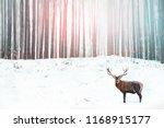 noble deer in the background of ... | Shutterstock . vector #1168915177