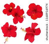 Hibiscus Flower Vector Clip Ar...
