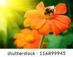 Bumble Bee Pollinating A Flowe...