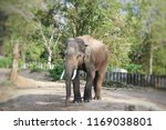 elephant in the forest | Shutterstock . vector #1169038801