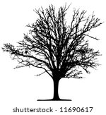 tree  vector  | Shutterstock .eps vector #11690617