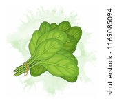 bunch of fresh spinach leaves... | Shutterstock .eps vector #1169085094