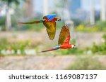 flying birds in the sky | Shutterstock . vector #1169087137