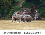 elephant walking in the river ... | Shutterstock . vector #1169221954