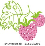 raspberry vector illustration | Shutterstock .eps vector #116926291