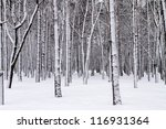 Snowy Trees In The Winter Forest