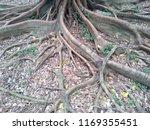 tree root in the park   Shutterstock . vector #1169355451