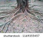 tree root in the park   Shutterstock . vector #1169355457