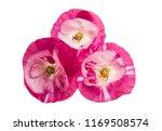 beautiful poppy flowers... | Shutterstock . vector #1169508574