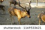 deer with beautiful antlers | Shutterstock . vector #1169533621