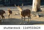 deer with beautiful antlers | Shutterstock . vector #1169533624