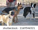 dogs socializing at canine...   Shutterstock . vector #1169546521
