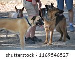 dogs socializing at canine...   Shutterstock . vector #1169546527