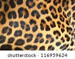 Hide Of Leopard
