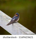 a dainty delightful  little... | Shutterstock . vector #1169623621
