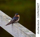 a dainty delightful  little... | Shutterstock . vector #1169623627