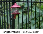 red male northern cardinal... | Shutterstock . vector #1169671384