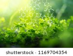 plants background with... | Shutterstock . vector #1169704354