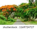 Road Between Trees - Fine Art prints
