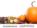 pumpkins and leaves  isolated... | Shutterstock . vector #1169737414