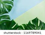 tropical jungle monstera leaves ... | Shutterstock . vector #1169789041