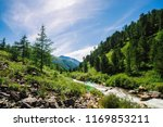 larch grow on rocky slope.... | Shutterstock . vector #1169853211