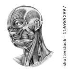 human head and neck anatomy... | Shutterstock . vector #1169892997