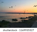 seagulls and the sunset at the... | Shutterstock . vector #1169935327