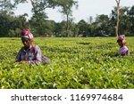 dibrugarh  assam india  27... | Shutterstock . vector #1169974684
