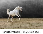 beauty of arabian horses | Shutterstock . vector #1170135151