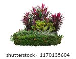 Tropical Landscaping Garden...