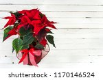 Red Poinsettia. Christmas...